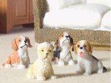 子犬4匹セット