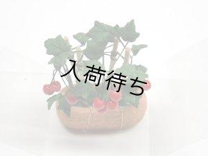 画像3: チェリートマト 鉢植え