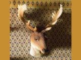 牡鹿ヘッド