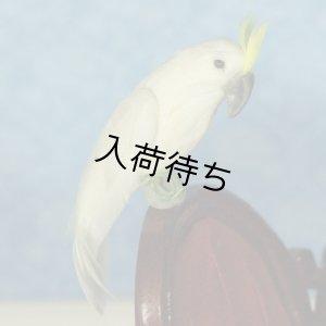 画像1: キバタン(Chalky the Cockatoo)