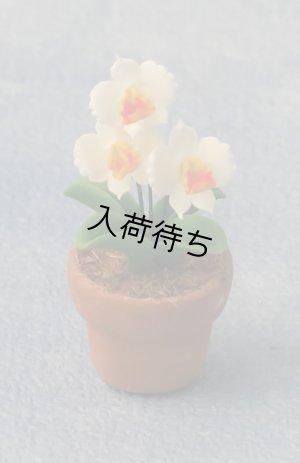 1/12サイズのドールハウス用ミニチュア ラン(Orchid 蘭) 鉢植え