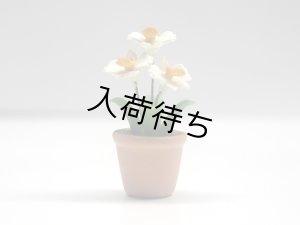 画像2: ラン(Orchid 蘭) 鉢植え