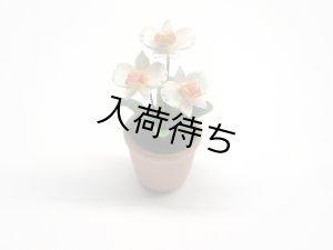 画像3: ラン(Orchid 蘭) 鉢植え